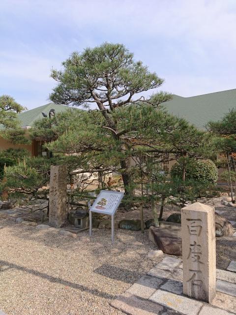 和田神社の影向松。