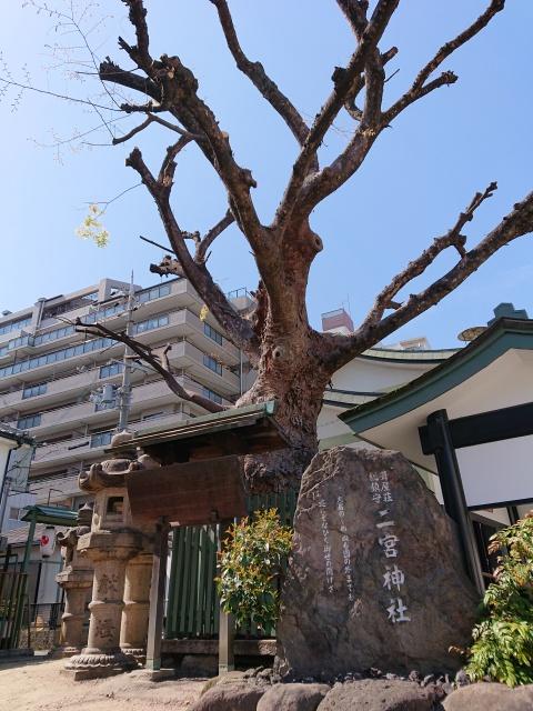 二宮神社の石碑と御神木。